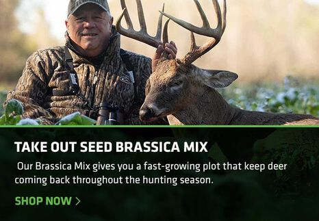 Take Out Seed Brassica Mix