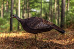 Photoform Hen Turkey Decoy